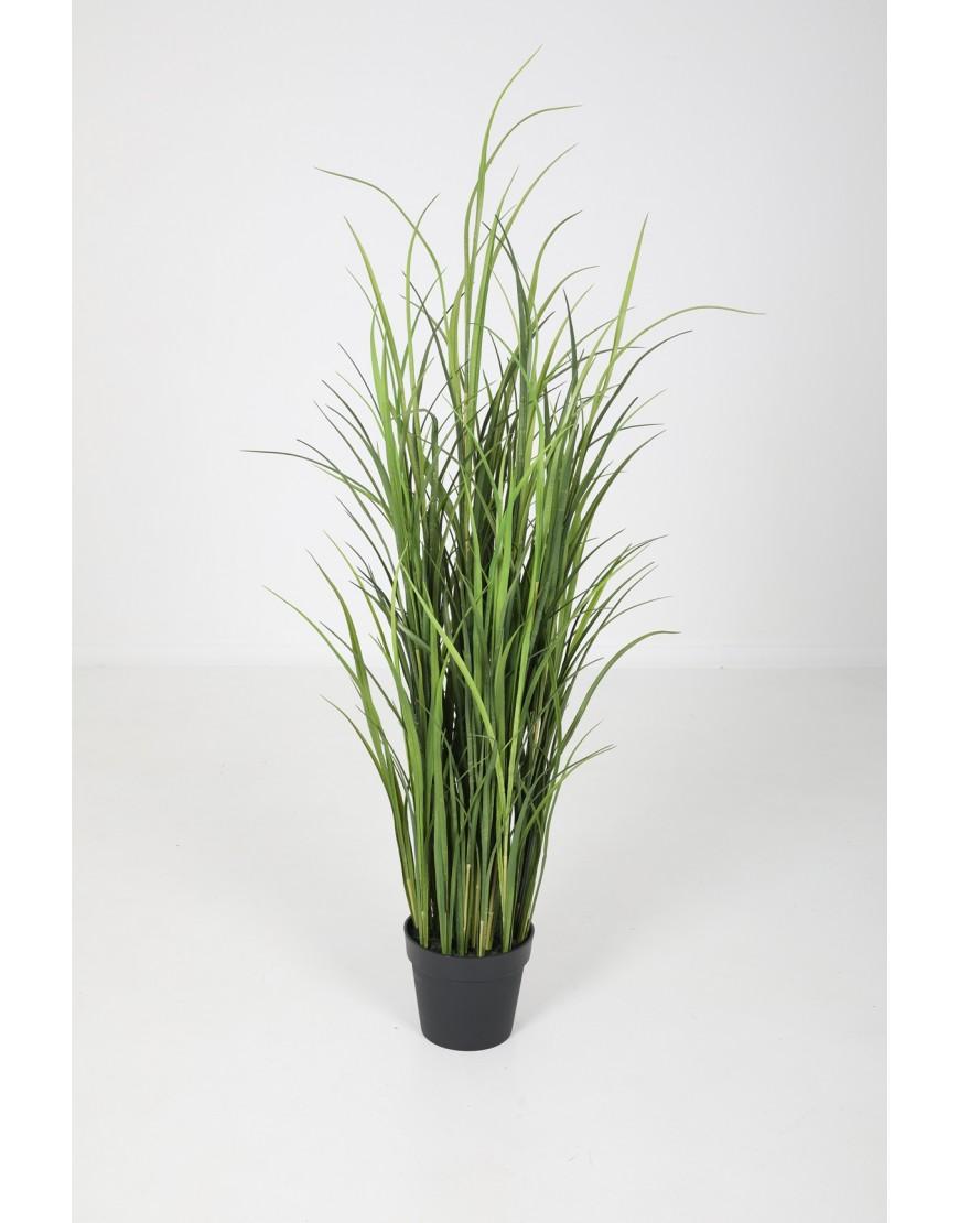 Green Grass in pot